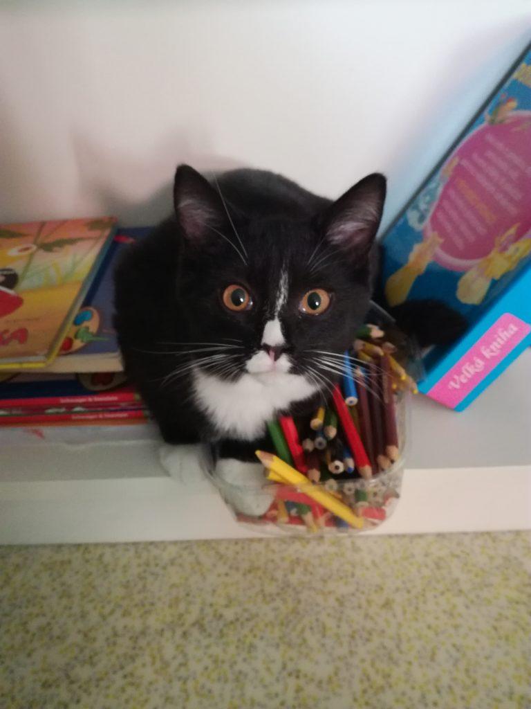 U Kočičích tlapek | Kočičí kavárna | Kladno